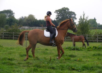 Horse riding in the field